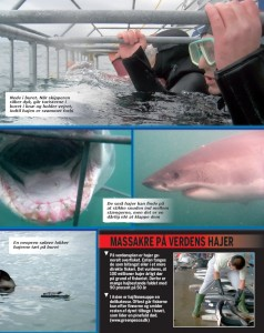 Dykning med hvidhajer | Tæt på dødens gab